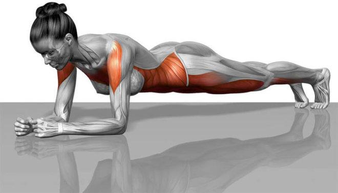 Plank cvičení